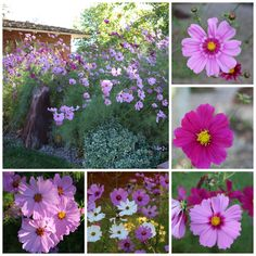 New Mexico Cosmos -