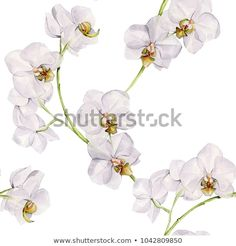 Find Watercolor Illustration Hand Painted Seamless Orchid stock images in HD and millions of other royalty-free stock photos, illustrations and vectors in the Shutterstock collection. Thousands of new, high-quality pictures added every day.