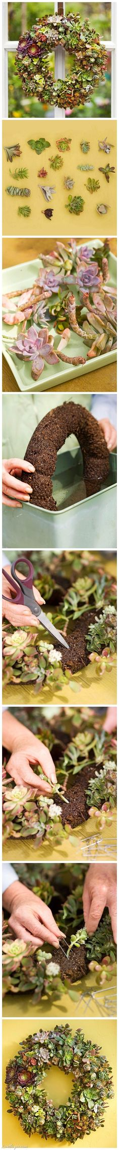 DIY Succulents Wreath Pictures, Photos, and Images for Facebook, Tumblr, Pinterest, and Twitter