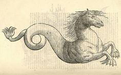 Equus marinus monstrosus from Aldrovandi's 'History of Monsters' (1642), for…