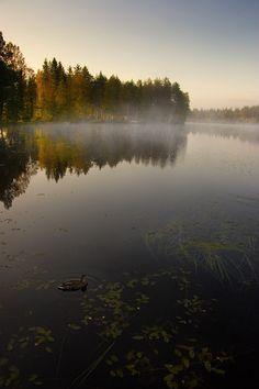 Morning mist #Finland #ScanAdventures