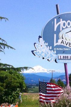 Fourth Of July at Hood River Lavender Farm  #fourthofjuly #lavenderfarm #hoodriver #mtadams #garden #flag