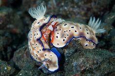 Foto subacquee, gli scatti vincitori dell'Underwater Photography Contest dell'Università di Miami - Focus.it