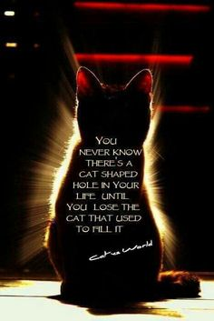 So true, once you have a cat, they will continue to show up just when you least expect it!
