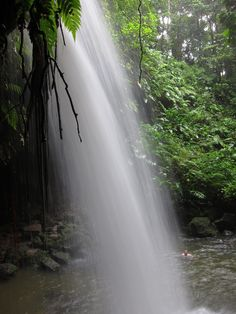 Emerald Pool, Dominica.