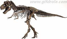 Fiche sur les fossiles et le métier de paléontologue
