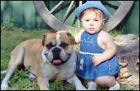 Alapaha Blue Blood Bulldog Questions Answered Here Blue Blood