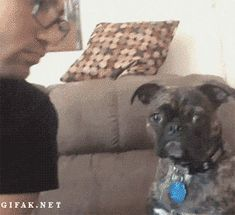 Funny Gifs Archives - Page 68 of 314 - The Meta Picture