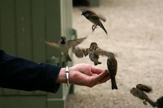 Birds eating out of her hand .......