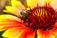 Just Bee by Pricope Marian on 500px