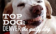 Oh!  We Love Denver!  Denver has a habit of getting into some sticky situations. That doesn't keep us from loving her though! Read our exclusive interview with this guilty dog.
