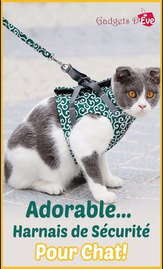 Animals And Pets, Cute Animals, Cat Harness, Kitty Games, Kitten Care, Cat Accessories, Girl And Dog, Pet Clothes, Small Dog Clothes