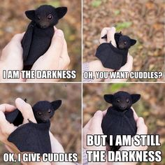 Funny Animal Jokes, Cute Funny Animals, Funny Cute, Cute Dogs, Funny Pics, Funny Captions, Top Funny, Funny Animal Humor, Cute Baby Bats