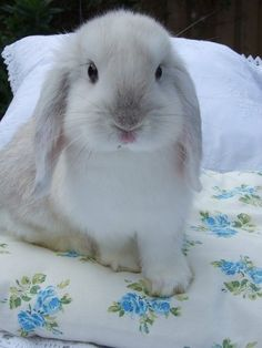 Such a sweet bunny!  What a cute face... <3