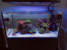 WaWaWang's 70g Canvas - Aquarium Journals - Nano-Reef.com Community