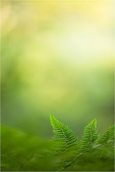 the green and the light....   Flickr - Photo Sharing!