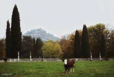 Where cows graze into Art.  #ogniraggiodisole #landscape_captures #landscaper #thehub_nature #thehub_colors #thehub_veneto #thehub_landscape #vivoveneto #volgoveneto #volgovicenza #igersveneto #igersvicenza