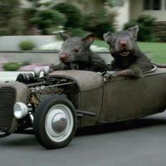 Ratatatatat...drive-by