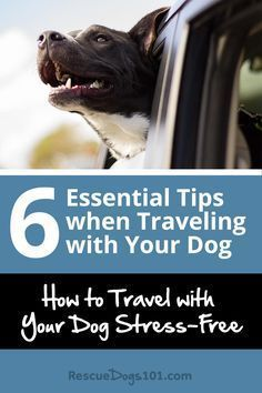 Essential Tips When Traveling With Your Dog C