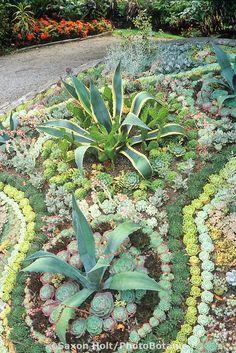 Succulent demonstration bed Van Dusen Botanic Garden, Vancouver