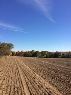 The nature of Fall Fall Halloween, Vineyard, Nature, Photography, Outdoor, Outdoors, Naturaleza, Photograph, Photo Shoot