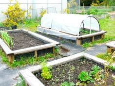 Raised bed vegetable gardening will improve plant growth if you have poor soil or garden in a rocky area. Raised Garden Beds, Raised Beds, Plant Growth, Outdoor Furniture Sets, Outdoor Decor, Vegetable Gardening, Growing Vegetables, Home And Garden, Garden Ideas