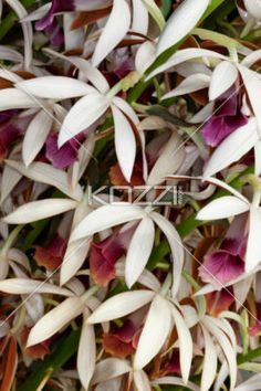 image of flowers. - Close-up image of flowers.