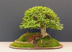 Resultado de imagem para bonsai