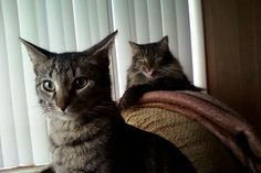 11 Jealous Cats With A Sibling-Rivalry Problem