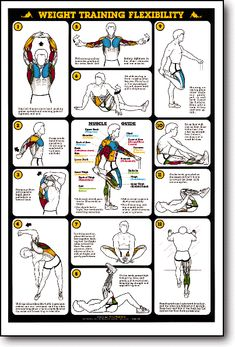 gold s gym xrs 50 exercise chart pdf yourviewsite co