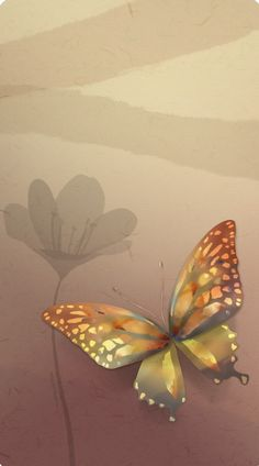 Butterfly Wallpaper, Owls, Moth, Butterflies, Insects, Animals, Painting, Animales, Animaux