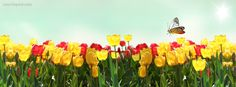 Tulips Red Yellow Butterfly Summer Spring Facebook Cover CoverLayout.com