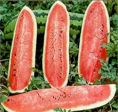 Watermelon Jubilee Great Heirloom Garden Vegetable by Seed Kingdom Bulk Seeds Watermelon Varieties, Watermelon Plant, How To Grow Watermelon, Bonsai, Seeds For Sale, Herb Seeds, Family Garden, Seed Packets, Seed Pods