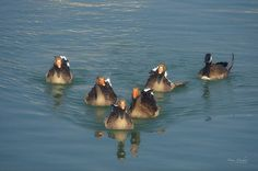 I love the formation formed by the geese in this #photograph. Odd Goose Out by Mary Machare. #wallart #decor
