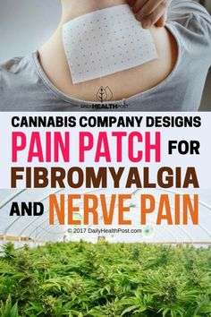 Cannabis Company Designs Pain Patch For Fibromyalgia And Nerve Pain – The Oily Guru