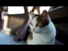 Houtong, Taiwan: The Village of 100 Cats | The Animal Rescue Site Blog - Ok, so now I would like to visit Taiwan.