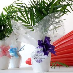 Mini Palm Plant Favors