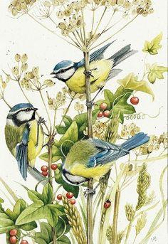 Flowers Vintage Illustration Marjolein Bastin 42 New Ideas Illustration Botanique, Bird Illustration, Graffiti Kunst, Illustrator, Marjolein Bastin, Nature Artists, Dutch Artists, Watercolor Bird, Bird Prints