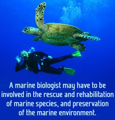 The responsibilities of a marine biologists is to take of endangered marine species. Another key responsibility for being a marine biologists is to protect marine habitats from human interaction. Marine Biology Jobs, Biology Major, My Future Job, Future Career, My Marine, Marine Life, Wildlife Biologist, Marine Environment, Marine Conservation