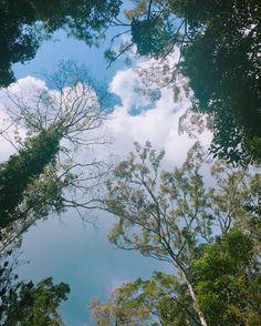 #숲 #초록 #나무 #구름 #하늘 #자연 #트레킹  #forest #trees #wood #green #blue #sky #air #clouds #trekking #sight #landscape #natureshots #nature #naturelovers #naturephotography #coolpic by borx610