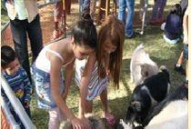 barnyard petting farm
