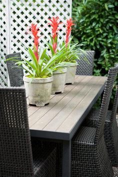 Outdoor Living Room | Traditional Home - In this mostly foliage garden, a trio of potted bromeliads energize the outdoor living room's smart charcoal- and-white color scheme with their spikey bright red blooms.