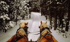 Horse drawn carriage Shire Snow Forest Ever since I was a little girl I have dreamt of riding in a horse drawn carriage