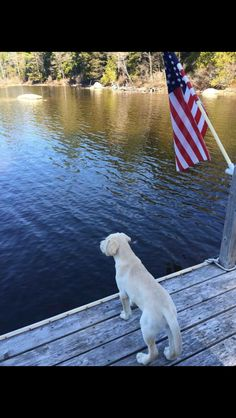 southernraisedmarinecorpsmade: Frat hound, summer, and America. (via TumbleOn) Mans Best Friend, Girls Best Friend, Puppy House, Crazy Dog Lady, Dog Houses, Lake Life, Doge, Animal Pictures, Fur Babies