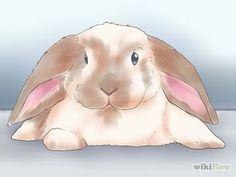 Play and bond with your rabbit with these steps :)