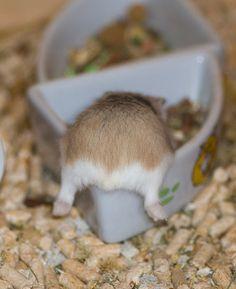 Hamster butt...