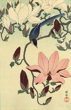 "Japanese Art Print ""Magnolia and Black-winged Magpie"" by Ohara Koson, woodblock print reproduction, fine art, asian art, cultural art Botanical Art, Botanical Illustration, Illustration Art, Illustrations, Japanese Painting, Chinese Painting, Chinese Art, Poster Mural, Ohara Koson"