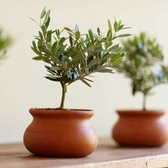 How about a tiny olive tree as a favour.  Google Image Result for http://www.thegreenhead.com/imgs/xl/olive-plant-topiary-xl.jpg