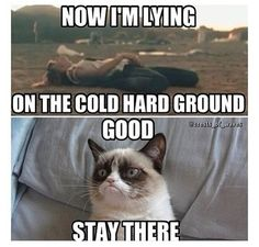 thats a good one Grumpy Cat!!!