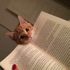 Do not read, play with me!!!